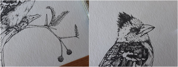 details of pen illustration of crested barbet