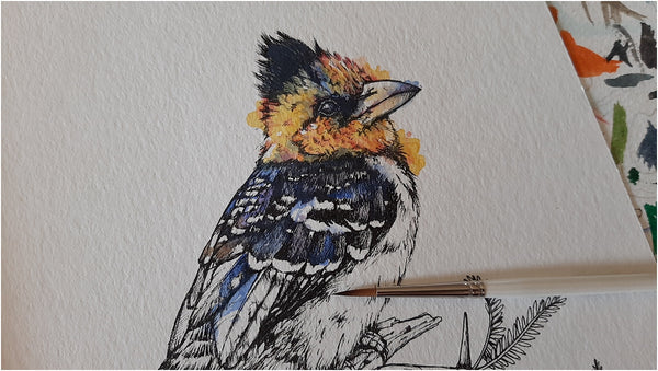 work in progress of pen and watercolour crested barbet illustration