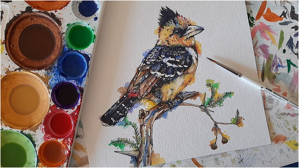 pen and watercolour illustration of crested barbet garden bird