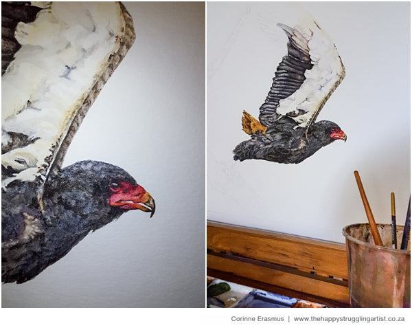 Realistic wildlife watercolor portrait of bateleur eagle in South Africa