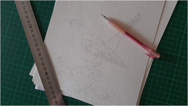 pencil outline of cape robin-chat illustration