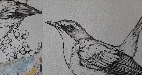 details of pen illustration of south african garden bird