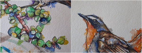 details of watercolour and pen bird illustration