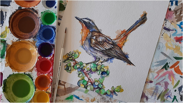 watercolour and pen illustration of cape robin-chat south african garden bird