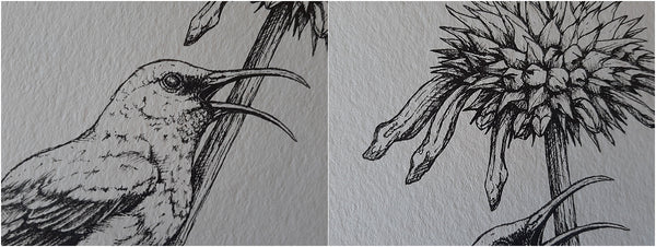 details of pen illustration of sunbird