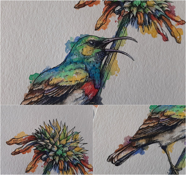 details of watercolour and pen illustration of double-collared sunbird