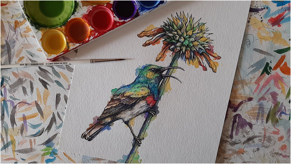watercolour and pen illustration of southern double-collared sunbird