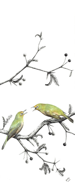 I told you so! Two quibbling Orange River white-eyes
