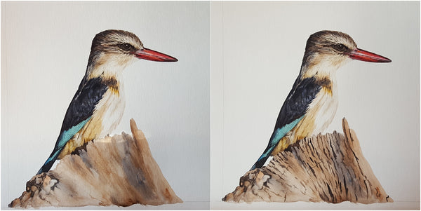brown hooded kingfisher watercolour painting work in progress