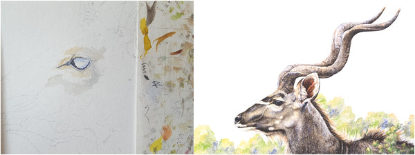 before and after of watercolour kudu bull painting