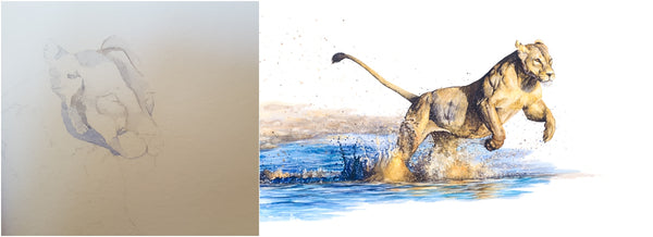 before and after of watercolour lioness running through water painting