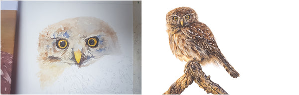 before and after of watercolour pearl-spotted owl painting