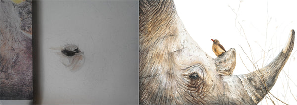 before and after of watercolour rhino and oxpecker painting