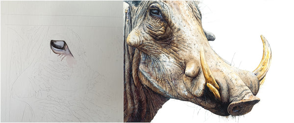 before and after of watercolour warthog painting