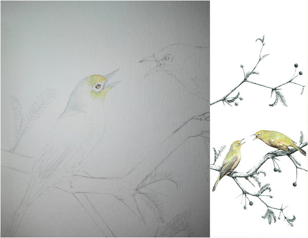 before and after of watercolour and pen orange river white-eye painting
