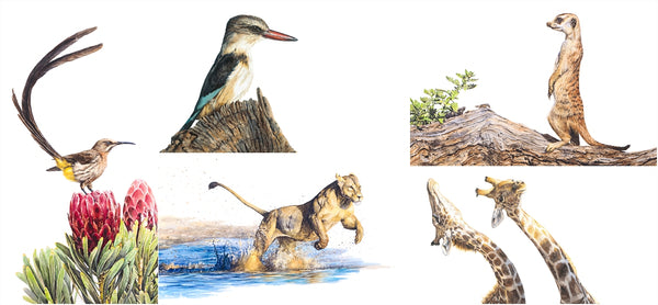 fine art wildlife prints the happy struggling artist cape town online shop