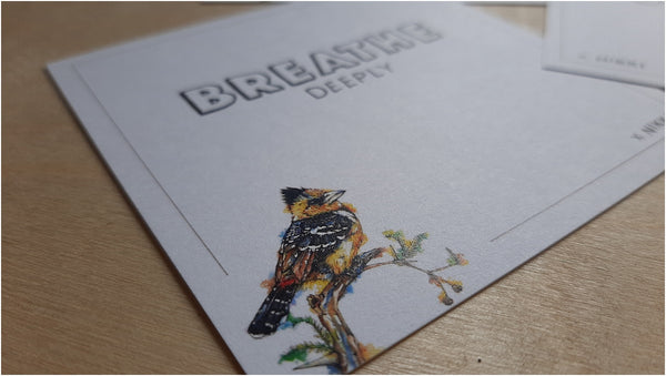 south african birds positive affirmation note cards