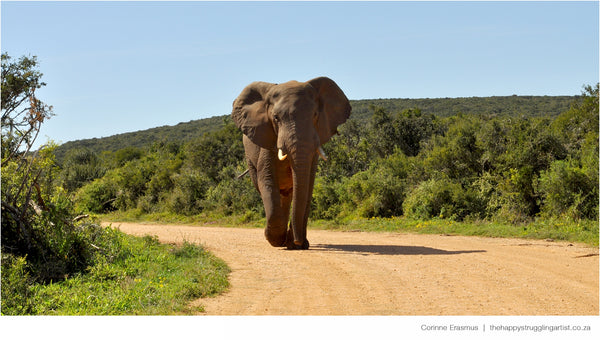 Elephant bull in Addo Elephant National Park South Africa