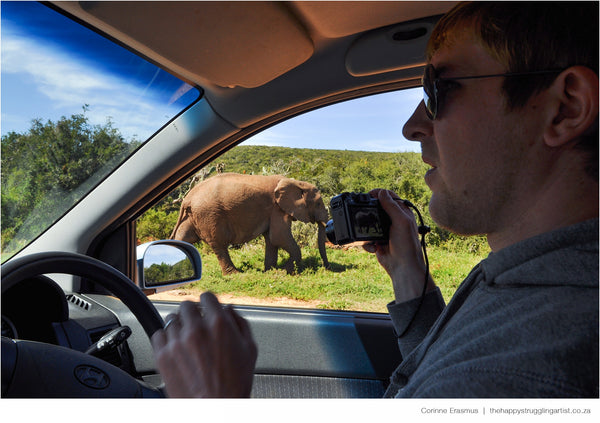 Shocked driver during elephant encounter in Addo South Africa