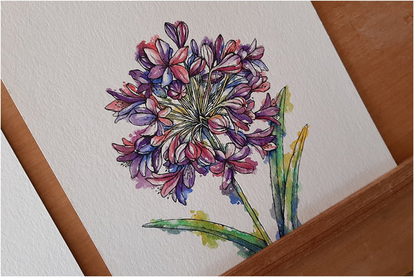 watercolour and pen agapanthus downloadable wall art illustration