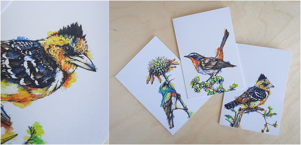 south african garden birds greeting cards