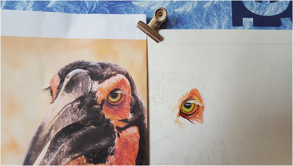 work in progress watercolour painting of southern ground hornbill