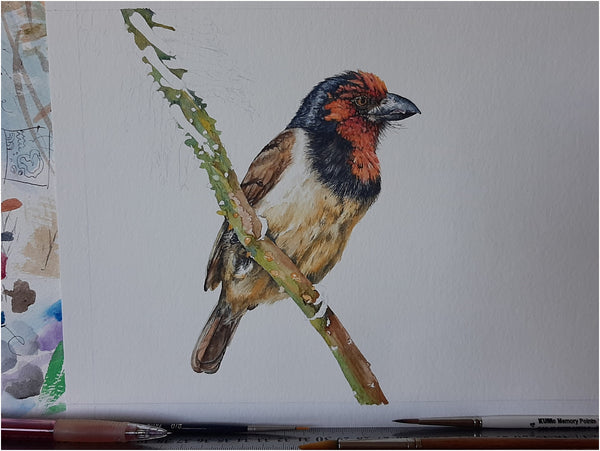realistic watercolour barbet painting work in progress