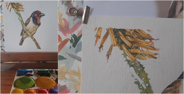 realistic watercolour barbet and aloe flower painting work in progress