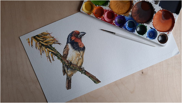 photo-realistic watercolour painting of black-collared barbet