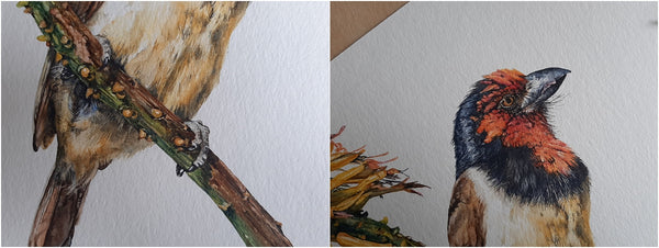 details of super-realistic watercolour painting of black-collared barbet