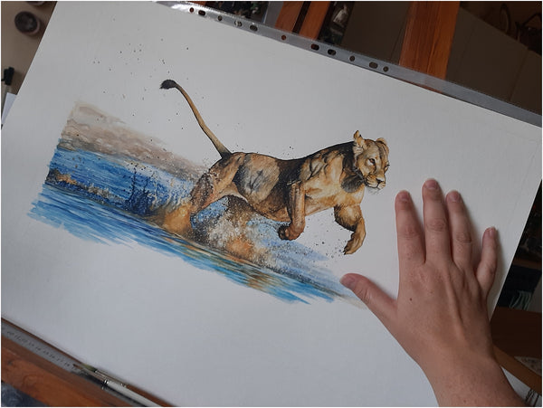size of lioness watercolour in progress