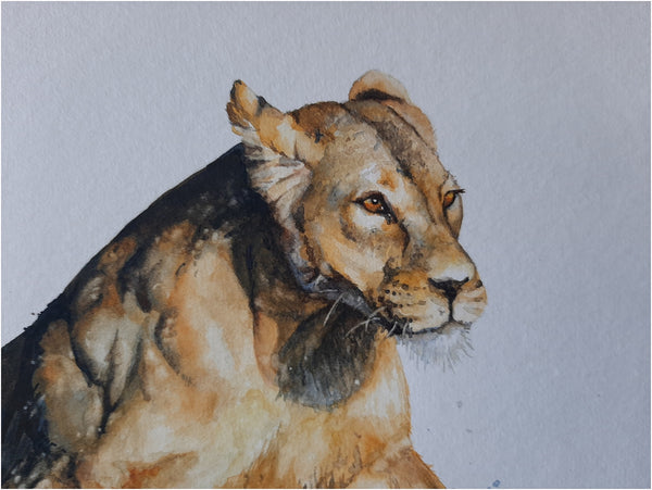 close up of lioness running through water watercolour