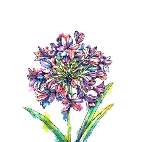 Agapanthus Downloadable Wall Art