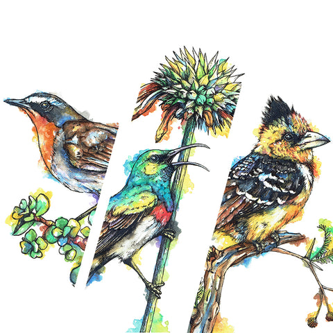 Downloadable Wall Art: Set of 3 SA Birds