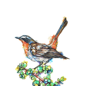 Cape Robin-Chat Downloadable Wall Art