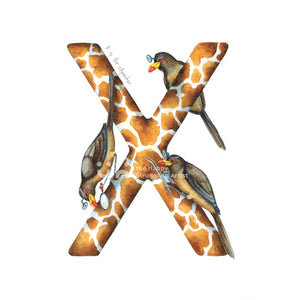 X is for oXpecker