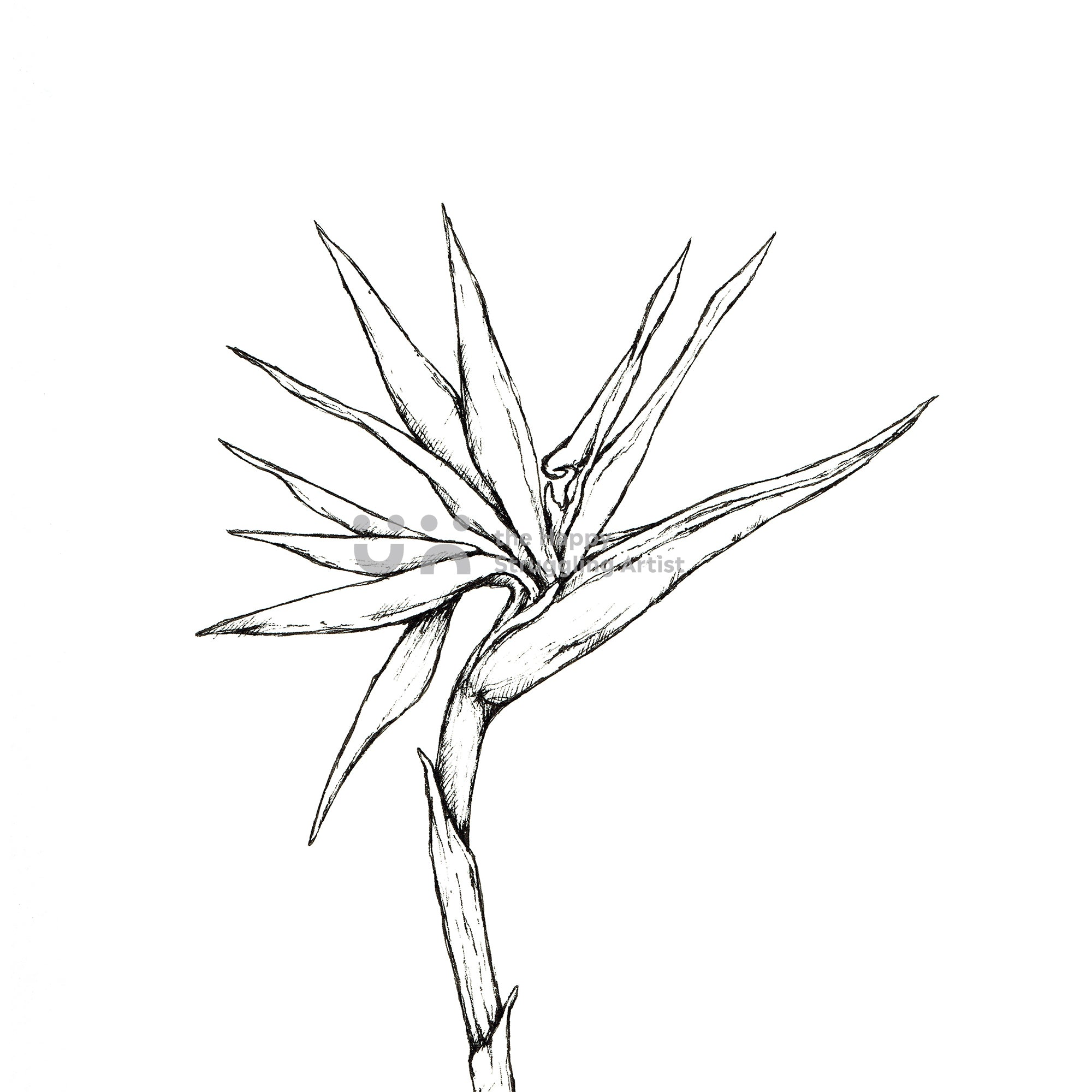 Monochrome Strelitzia Downloadable Wall Art