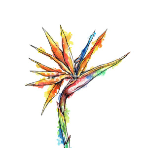 Strelitzia Downloadable Wall Art