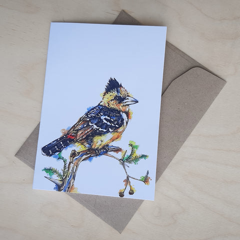 Greeting Card: Crested Barbet