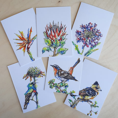Greeting Cards: 6-Pack