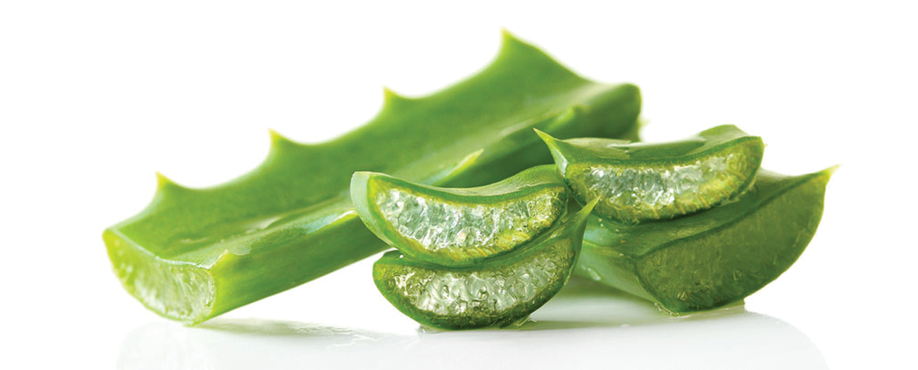 The Ingredient List: Aloe Vera