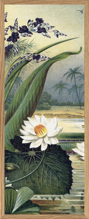 Slim Mega Water Lily