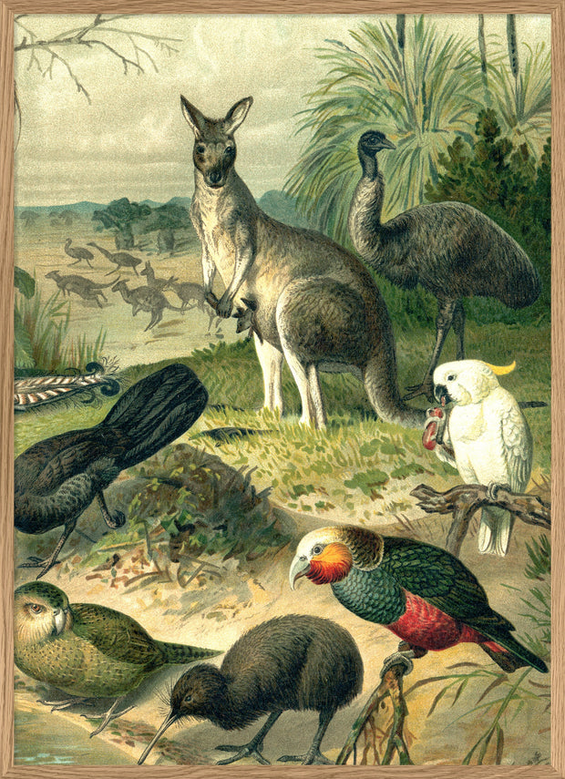 Australian Fauna Right side