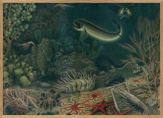 Deep Sea Fauna Horizontal