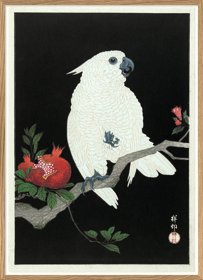 Cockatoo & Pomegranate