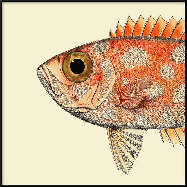Dotted Orange Fish Head