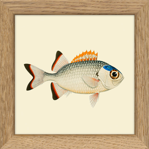 Fishes. Print #MS017