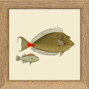 Fishes. Print #MS024