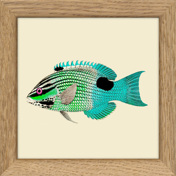 Fishes. Print #MS036