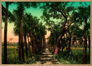 PP01H Palm Path